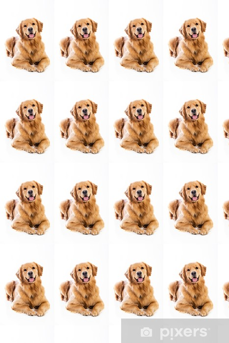 Golden Retriever Vinyl Custom-made Wallpaper - Mammals