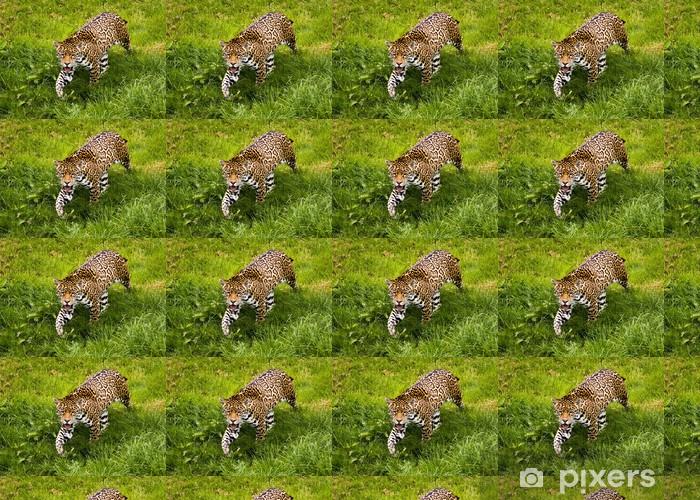 Papier peint vinyle sur mesure Jaguar - Panthera onca - Mammifères