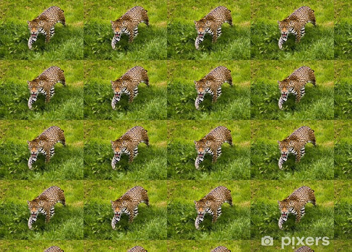 Tapeta na wymiar winylowa Jaguar - Panthera onca - Ssaki