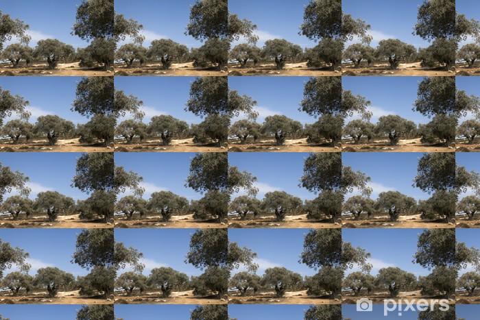 Vinyltapete nach Maß Olivenbäume auf den Hängen der Berge - Landwirtschaft
