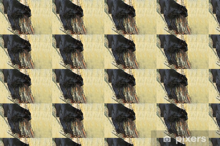 Vinyltapete nach Maß Leopard - Säugetiere