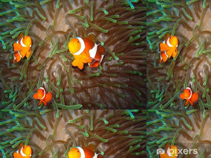 Vinylová Tapeta Tropické klaun ryby family - Vodní a mořský život