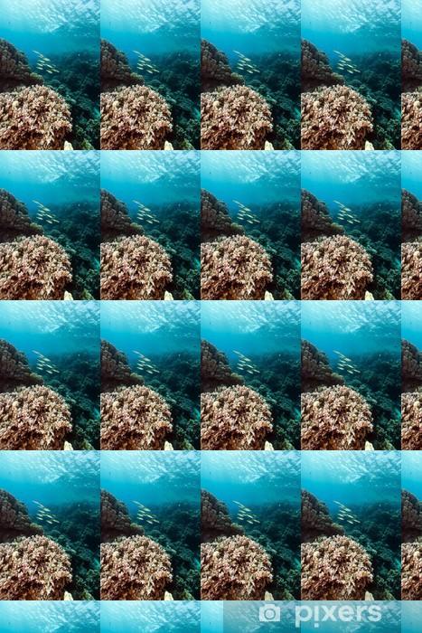Tapeta na wymiar winylowa Ryby i tropikalne rafy w Morzu Czerwonym. - Zwierzęta żyjące pod wodą