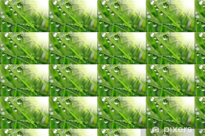 Vinyltapete nach Maß Frisches Gras mit Tautropfen close up - Jahreszeiten