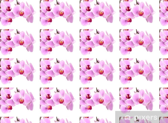 Pink Orchid Flower Close Up Isolated On White Wallpaper Vinyl Custom Made