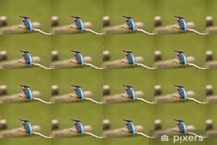 Vinyltapete nach Maß Eisvogel (Alcedo atthis) - Vögel