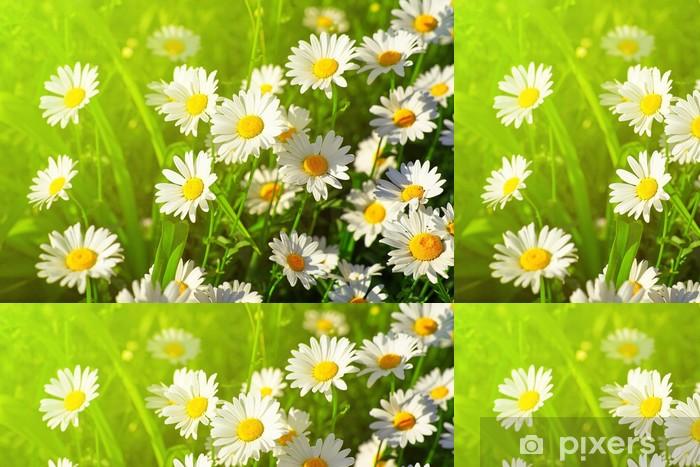 Papier peint à motifs vinyle Daisy fleur sur le pré vert - Fleurs