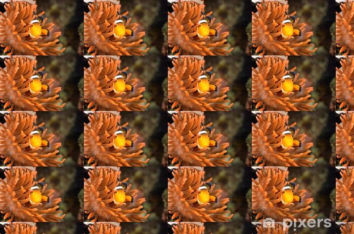 Tapeta na wymiar winylowa Błazenki w akwarium morskim - Zwierzęta żyjące pod wodą