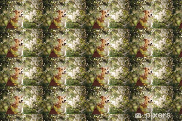 Papier peint vinyle sur mesure Portrait de chien border collie au printemps - Mammifères