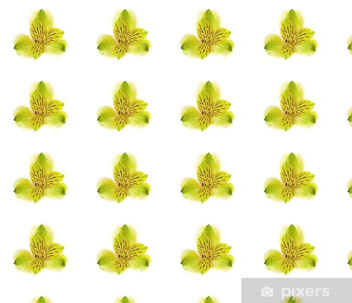 Vinyltapete nach Maß Blumen-grüne Orchidee isoliert auf einem weißen Hintergrund. - Blumen