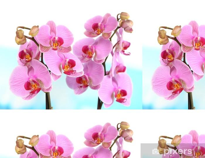 Vinylová Tapeta Jemná krásná orchidej na přírodním pozadí - Květiny