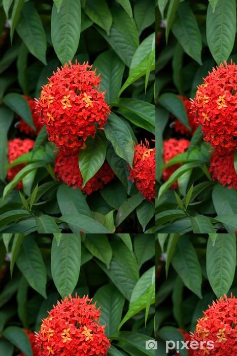 Vinylová Tapeta Ashoka květiny, Popular Flowers roste v jižní Indii - Květiny