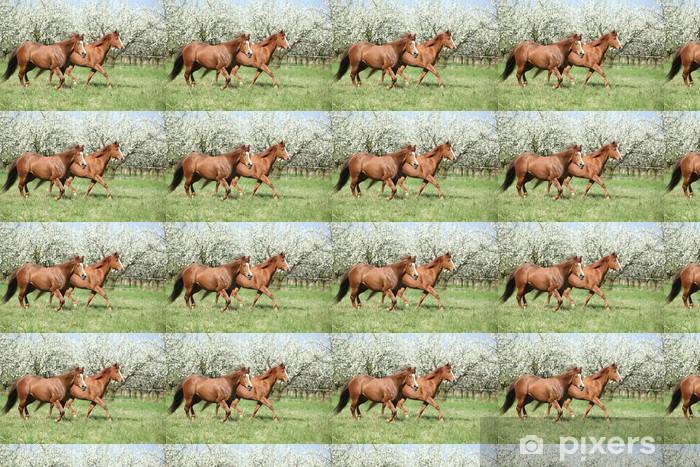 Vinylová tapeta na míru Dvě čtvrtletí koně běží v přední části kvetoucích stromů - Savci