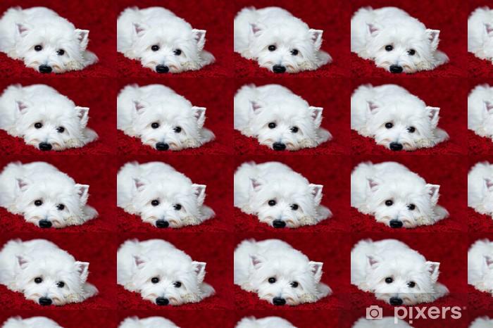 Carta da Parati a Motivi in Vinile West Highland White Terrier sdraiato - Mammiferi