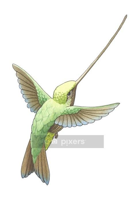 Naklejka na ścianę Koliber -