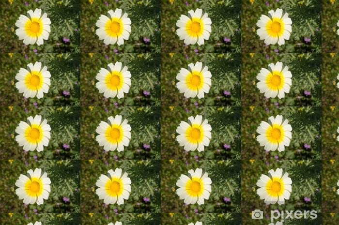 Vinylová tapeta na míru Wild daisy - Květiny