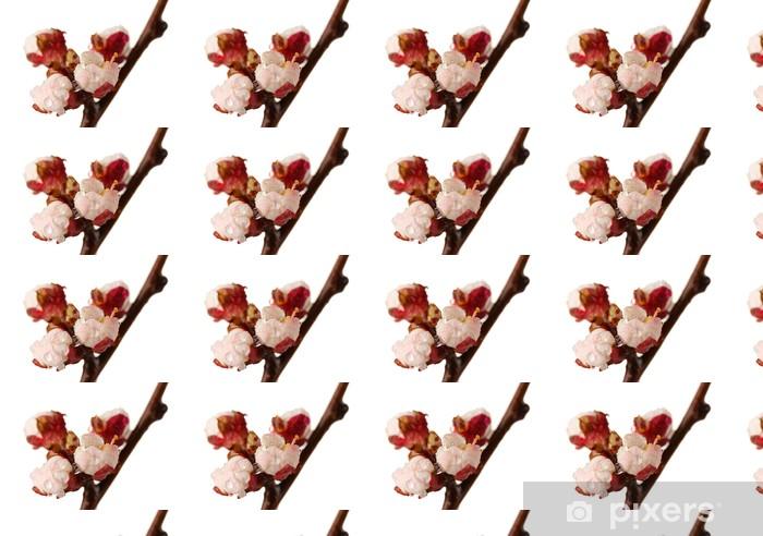 Vinyltapete nach Maß Schöne Marillenblüte mit Tropfen, isoliert auf weiß - Blumen