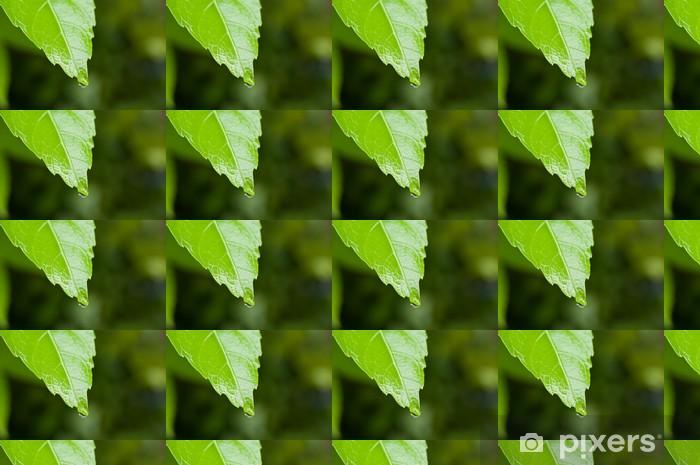 Vinylová tapeta na míru Drop a čerstvé zelené - Ekologie