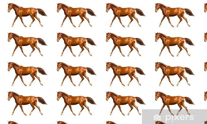 Vinylová tapeta na míru Mladý kůň - Savci