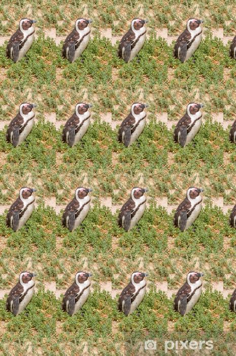 Tapeta na wymiar winylowa Pingwin - Afryka