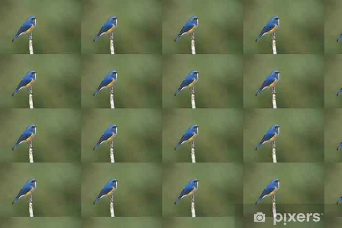 Papier peint vinyle sur mesure Himalaya Bluetail sur petite branche, Thaïlande - Oiseaux