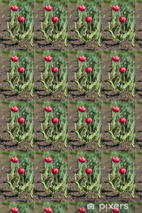 Tapeta na wymiar winylowa Kolorowe tulipany - Kwiaty