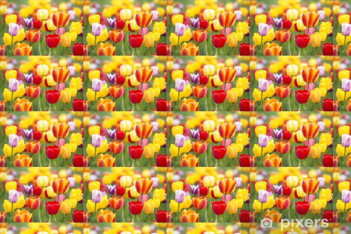 Colorful Tulips Vinyl custom-made wallpaper - Themes