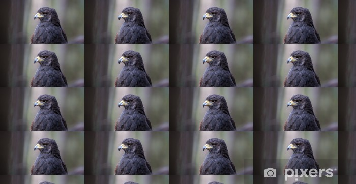Papier peint vinyle sur mesure Harris Hawk - Oiseaux