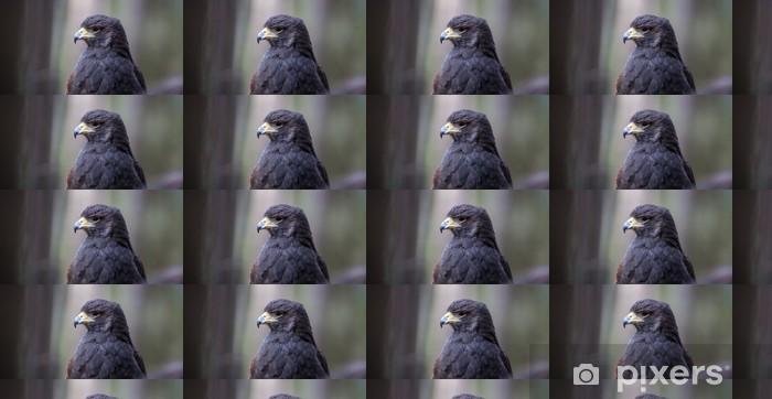 Tapeta na wymiar winylowa Harris Hawk - Ptaki