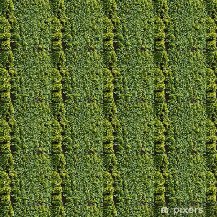 Papier peint vinyle sur mesure Parthenocissus vrille plante grimpante décorative - Plantes