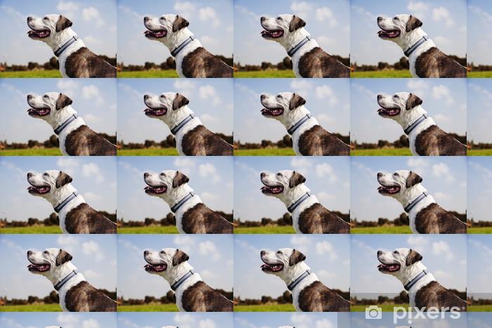 Måttanpassad vinyltapet Lycklig Pitbull på Park - Däggdjur
