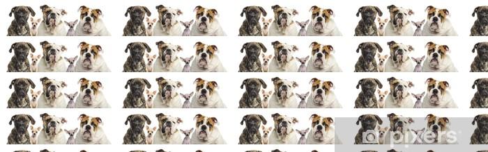 Carta da parati in vinile su misura Primo piano di un gruppo di cani, isolati su bianco - Mammiferi