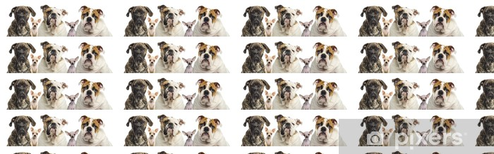 Close-up of a group of dogs, isolated on white Vinyl custom-made wallpaper - Mammals