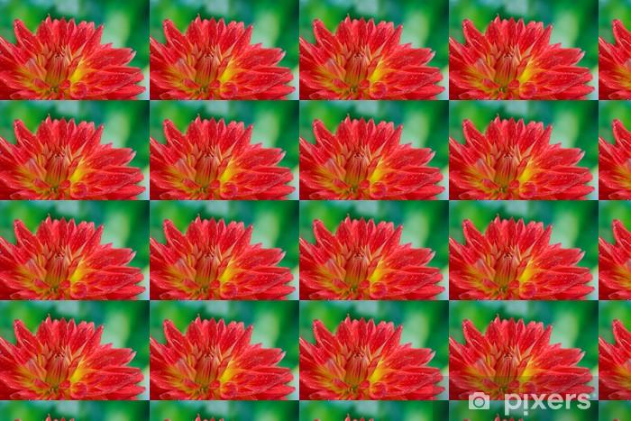 Papier peint vinyle sur mesure Red automne dahlia fleur dans le jardin - Fleurs