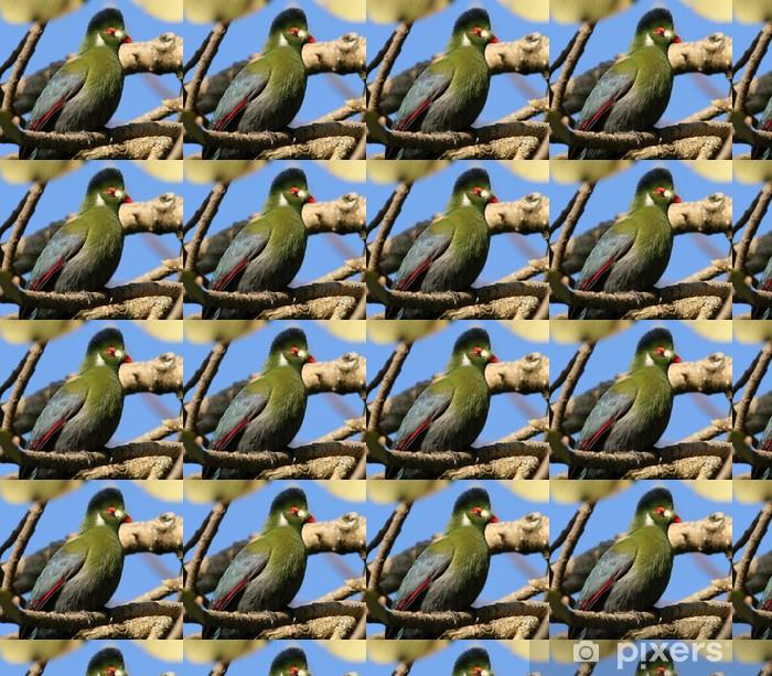 Tapeta na wymiar winylowa Touraco - Ptaki