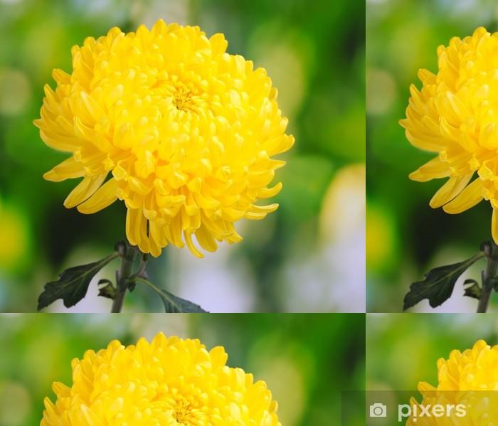 Tapete Yellow Herbst Chrysantheme Im Garten Pixers Wir Leben