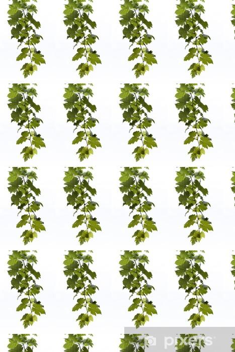 Tapeta na wymiar winylowa Grape liści z odizolowanych, izolowane - Rośliny