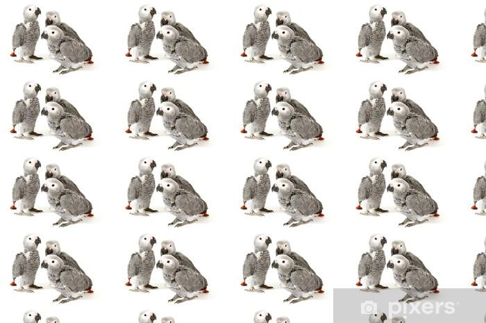 Tapeta na wymiar winylowa 3 dzieci papugi na białym tle - Naklejki na ścianę