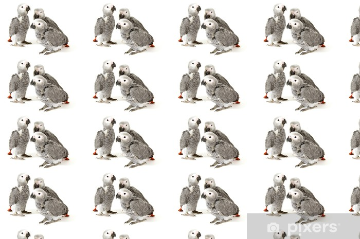 3 baby parrots isolated on white Vinyl custom-made wallpaper - Wall decals