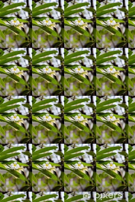 Tapeta na wymiar winylowa Plumeria obtusa - Azja