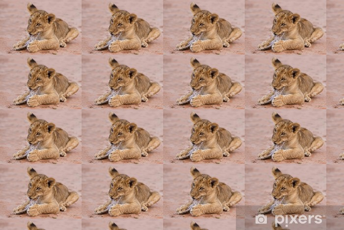 Cute Lion Cub Playing On Sand In The Kalahari Wallpaper Pixers