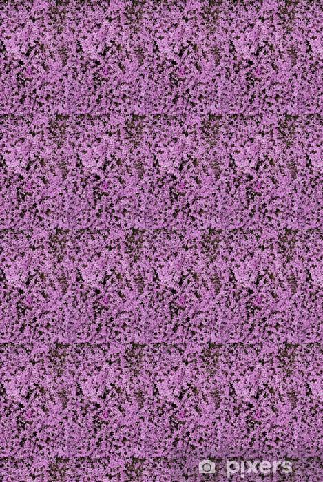 Tapeta na wymiar winylowa Fioletowy dywan pełzanie Phlox. Phlox subulata. - Kwiaty