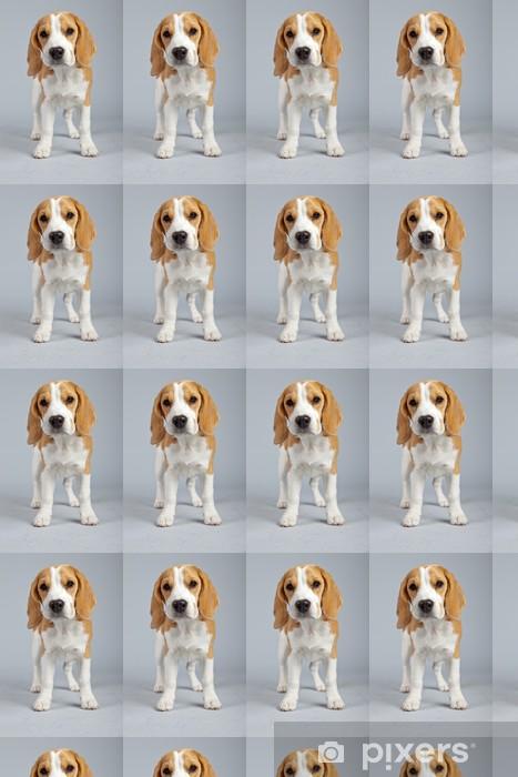 Vinylová tapeta na míru Roztomilé štěně beagle pes izolovaných na šedém pozadí. Knoflíček - Savci
