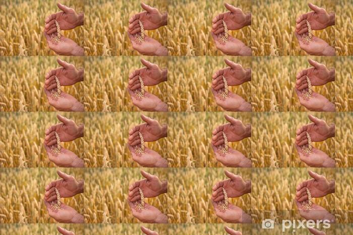 Tapeta na wymiar winylowa Pszenica w rękach - Rolnictwo