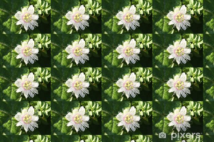 Passiflora foetida L. Personlige vinyltapet - Blomster