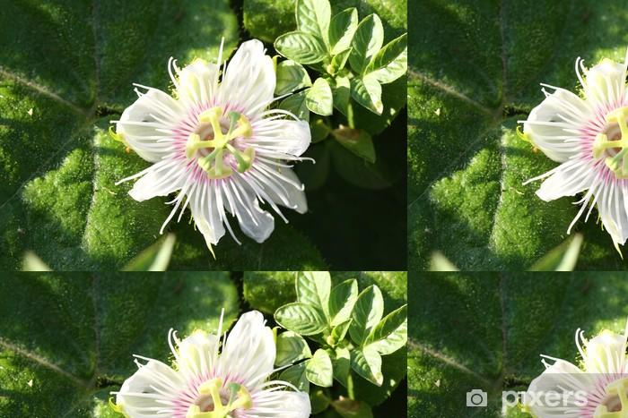 Vinyl Behang Passiflora foetida L. - Bloemen