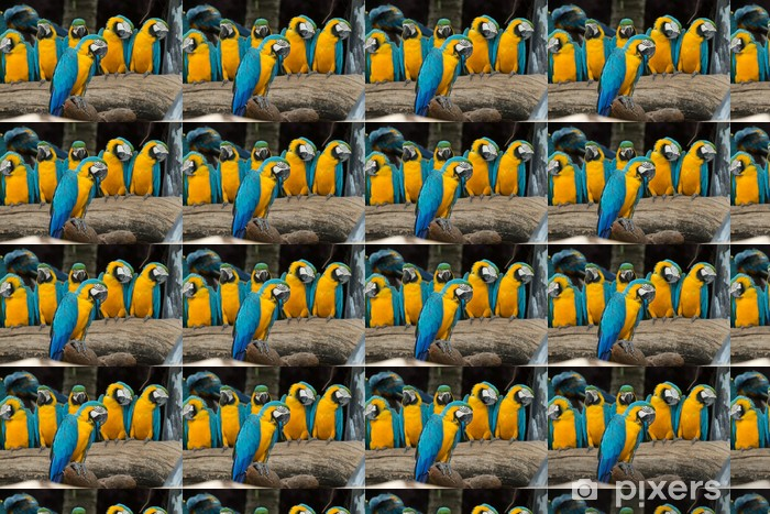 Vinylová tapeta na míru Papoušek pták - Témata