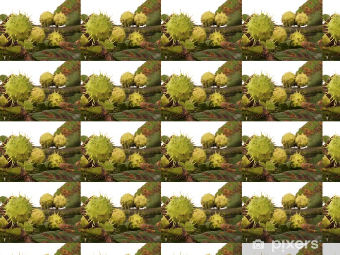 chestnuts with leaves as a background Vinyl Custom-made Wallpaper - Seasons
