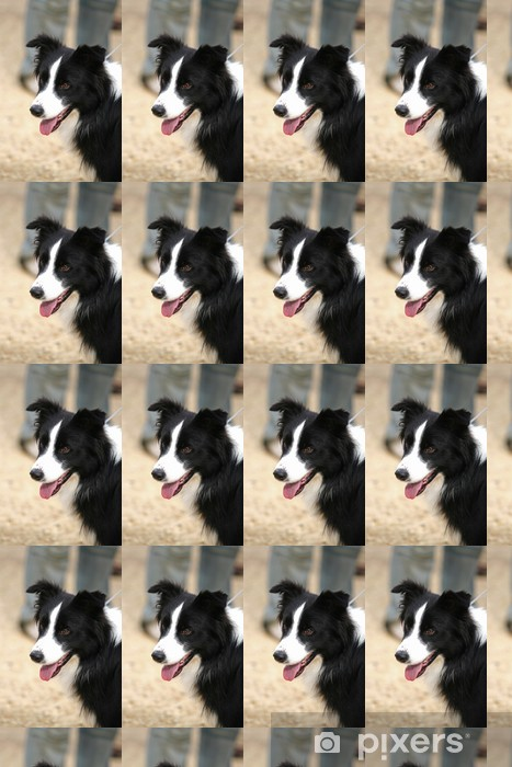 Border Collie Vinyl custom-made wallpaper - Themes