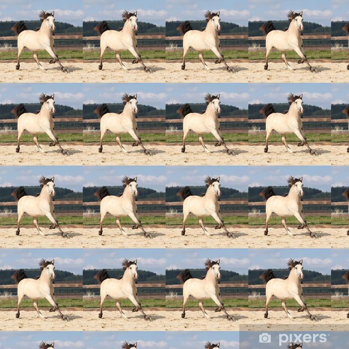 Vinylová tapeta na míru Krásná palomino koně běží - Savci